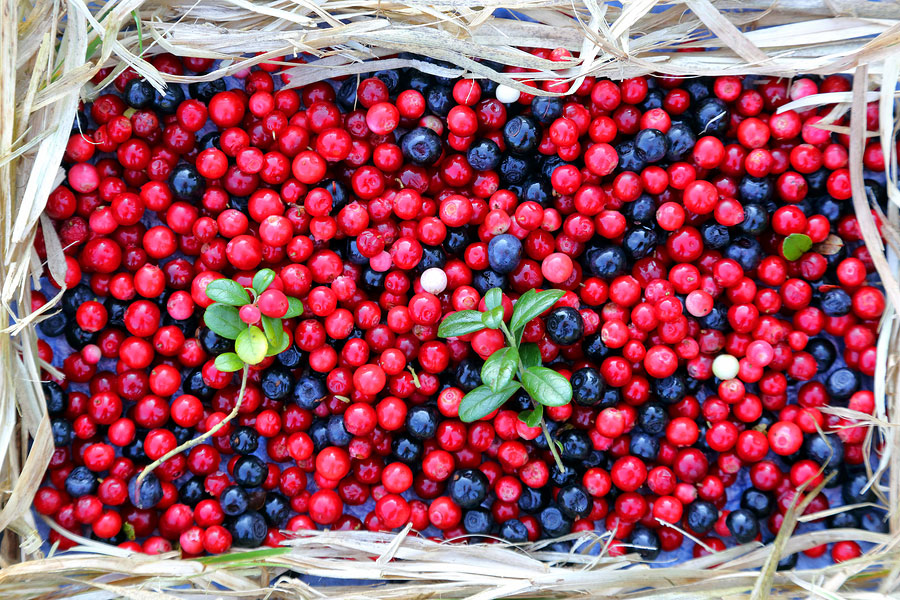 DNN Blackberries Cranberries